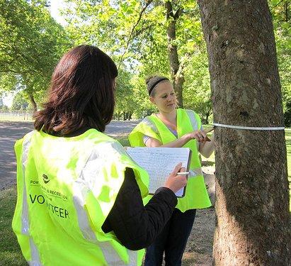 Tree Inventory Volunteers Needed