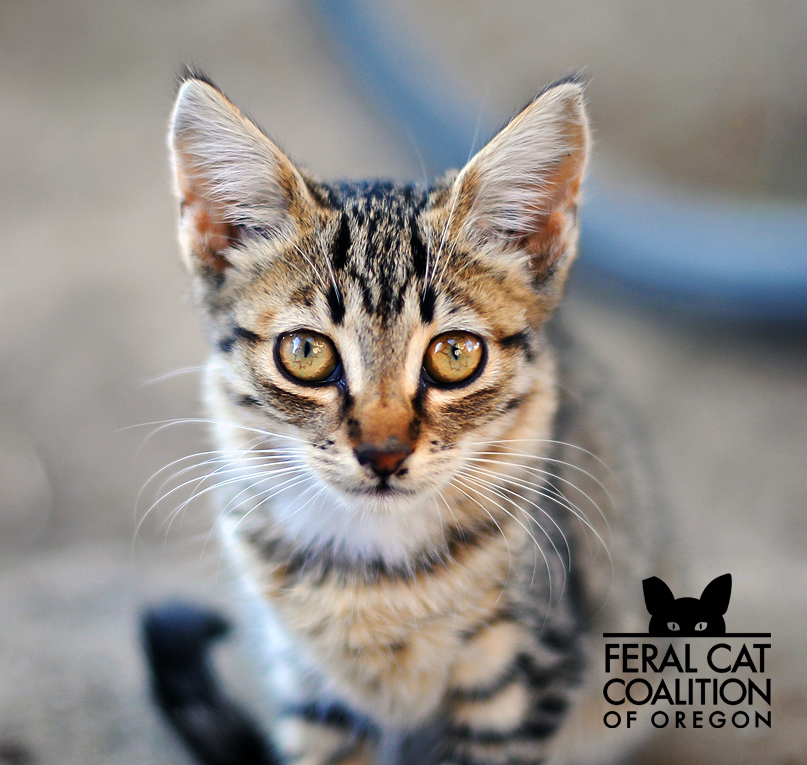 FREE Spay/Neuter Services in February for Feral and Stray Cats!