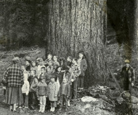 Free Workshop on Researching Historic Trees on January 30th