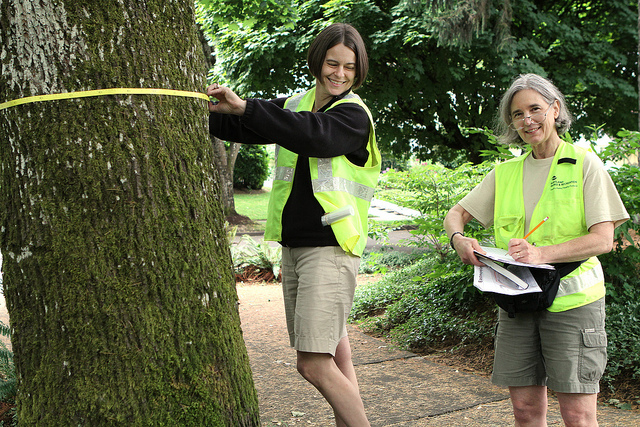 Tree by Tree, Block by Block: Join volunteers to inventory every street tree in North Tabor
