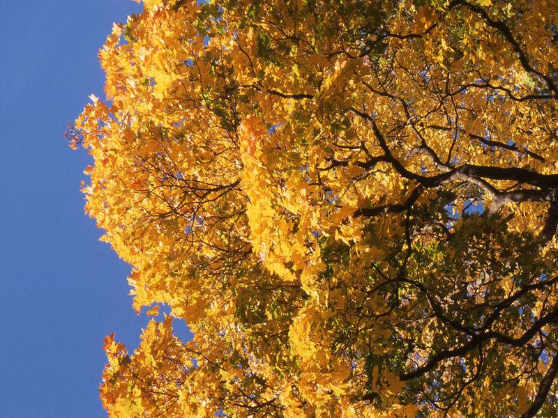 North Tabor Street Tree Inventory Report